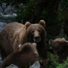 Protecting Real Mama Grizzlies