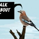 birdtalk copy