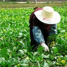 Chinese Woman Farmer_opt