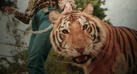 Tiger King: Lessons on Intimate Partner Violence