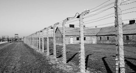 Holocaust Daughters: A Genre