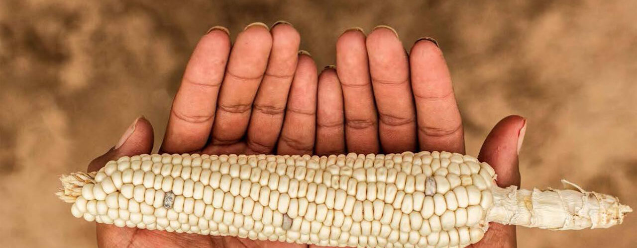 Strengthening Food Security and Sovereignty in Indian Country